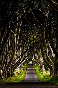 The Dark Hedges, Co. Antrim, Northern Ireland