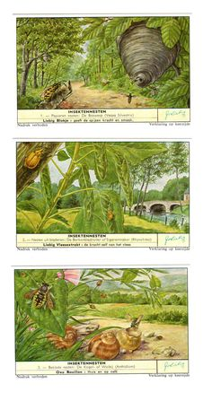 """1960 Liebig Insektennesten Vintage Trading Cards Set of Six Advertisment Cards for Liebig Extract of Meat Company highly collectible in the Vintage Postcards section of NookCove. The theme of the 2-7/8"""" x 4-7/8"""" card set is animals. Written in the Dutch language in Belgium, Liebig produced many illustrated advertising products: table cards, menu cards, children games, free trade card sets, calendars, posters, poster stamps, paper and other toys by NookCove"""