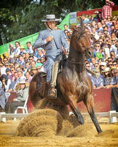 Francisco Diaz con Heno FO #domavaquera #sevilla #sevillahoy #coriadelrio #puebladelrio #doshermanas #lospalaciosyvillafranca #carmona #cordoba #jerez #fei #caballos #horse #andaluciaviva #hinojos #mairenadelaljarafe #huelva