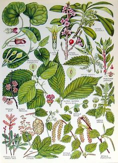 1965 Vintage Flower Print