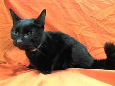 (44) NYC Urgent Cats - 03/15/2014 – Saturday NYC ACC Kill List