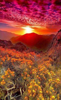 Pretty Nature!