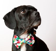 Doggie does bowtie