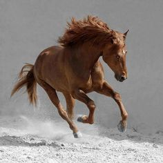 Spirit, brown beauty, dust, animal, horse, hest, running like the wind, beautiful, gorgeous, photograph, photo