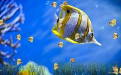 free 3d sound desktop moving background living dolphins animated installation. | Download Free Marine Life Aquarium Animated Wallpaper, Marine Life ...