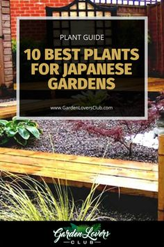 The main design elements of a Japanese garden include water, stones, lanterns, and bridges. The most crucial aspect, however, is the plants. If you are interested in creating your Japanese garden, consider these 10 plants. Japanese Garden Plants, Portland Japanese Garden, Chinese Garden, Water Flowers, Tiny Flowers, Garden Inspiration, Garden Ideas, Growing Peonies, Japanese Water