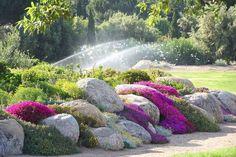 Les 40 meilleures images de Jardin Rocaille en 2019 | Landscaping ...