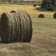 Hay For sale in weatherford, tx: Coastal Bermuda / Native Grass Round Bales