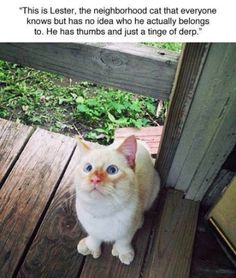 A tinge of derp