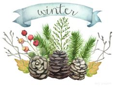 Watercolor Winter Clip Art - Pine Branches, Cones, Berries, Leaves - Digital Download - 10 PNG