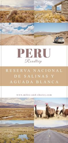 Das Reserva Nacional de Salinas y Aguada Blanca sollte bei einer Peru Reise weit oben auf der Bucket List stehen. Der Nationalpark befindet sich im Süden von Peru und besticht durch unglaublich schöne Landschaften und wild lebende Guanacos! In unserem Guide liefern wir 3 Routenvorschläge, Tipps zur Planung deiner Reise und worauf du achten solltest. Achtung: Süße Alpakafotos sind auch wieder mit am Start! #perureise #peru #perutravel #salinasyaguadablanca #roadtrip Machu Picchu, Peru, Roadtrip Europa, America, Poster, Travel, Arequipa, South America Travel, Patagonia