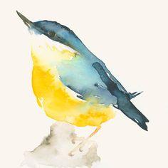Bird Art Print Blue and Yellow Bird by dearpumpernickel on Etsy