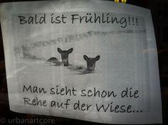 spring is coming... - #Aufkleber, #Spruch, #Statement, #Sticker