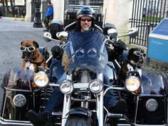 Biker Dogs Have the Need for Speed