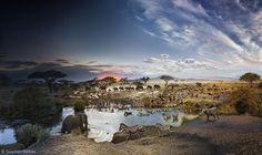 Photo by @stephenwilkes: Day To Night Serengeti National Park Tanzania Africa  Last Spring I traveled to Africa in search of a new location for my next Day To Night. I wanted to capture the passage of time as it related to the animal kingdom and Africas incredible landscape. I scoured the park with my assistants and our guides hoping for a vantage point rare to the human eye. As we drove along a long dirt path I noticed an abundance of greenery in the distance. It was a watering hole and as…
