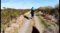 Enjoying a gorgeous trek through the local parish of Carrowbrowne, Galway. Horse Ears, Horses For Sale, Show Jumping, Cob, Horse Riding, The Locals, Trek, Jazz, Irish