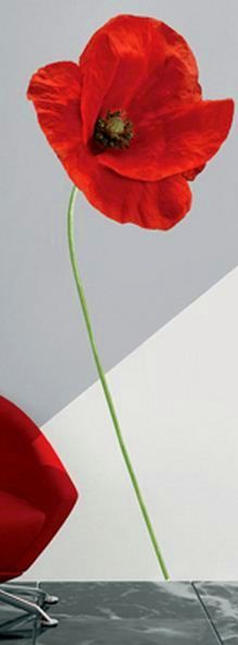 Red Poppy Wall Stickers
