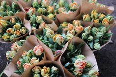 bundles of mixed parrrot tulips including: Professor Roentgen, Salmon Parrot and Apricot Parrot