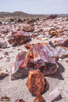 Experience the best hikes and viewpoints at Petrified Forest National Park with this list of things you can't miss -- written by a former park ranger! Minerals And Gemstones, Rocks And Minerals, Dinosaur Colorado, Petrified Forest National Park, Rock Hunting, Petrified Wood, Fossilized Wood, Hiking With Kids, Cool Rocks