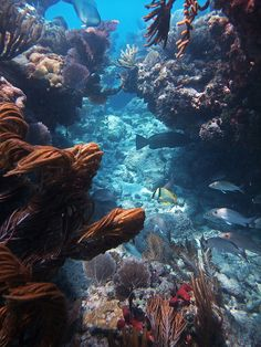 Snorkeling in Sombrero Reef, Florida Keys.--- I want to snorkel again! The sea creatures are gorgeous! Oh The Places You'll Go, Places To Travel, Places To Visit, Dream Vacations, Vacation Spots, Maui Vacation, Fauna Marina, Nature Sauvage, Florida Travel