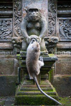 Sacred Monkey Forest, Ubud, Bali, Indonésie.