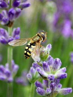 """""""That which is not good for the bee-hive cannot be good for the bees."""" -- Marcus Aurelius"""