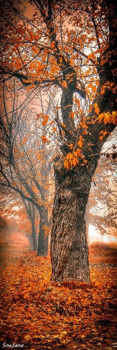 A Foggy Autumn Morning. I prefer photos only enhanced by photoshop, so true nature still has beauty.