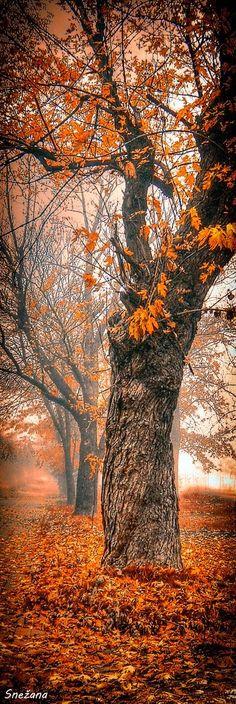 A Foggy Autumn Morning. I prefer photos only enhanced by photoshop, so true nature still has beauty.
