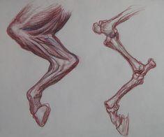 Resultado de imagen para horse anatomy for artists Horse Anatomy, Animal Anatomy, Anatomy Art, Anatomy Drawing, Horse Drawings, Animal Drawings, Art Drawings, Drawing Art, Alien Concept Art