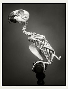 Creepy bird skeleton. Toni Garrn by Greg Kadel