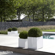 Garden Swimming Pool, Swimming Pools, Outside Living, Outdoor Living, Plant Design, Garden Design, Outdoor Water Features, Patio Layout, Back Gardens