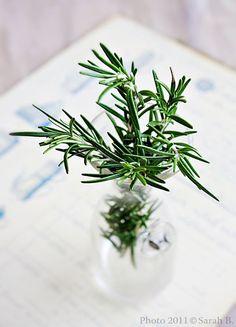 水に挿しておくと根が出てくる!水耕栽培できる植物 LOVEGREEN(ラブグリーン)