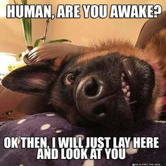 The German Shepherd patiently waits for his best friend to wake up ❤️