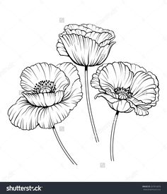 stock-vector-black-and-white-illustration-of-a-poppy-flowers-267816878.jpg (1370×1600)