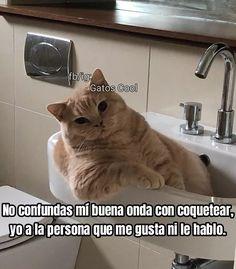 Gatos Cool, Sink, Cats, Animals, Instagram, Good Vibes, Sink Tops, Vessel Sink, Gatos