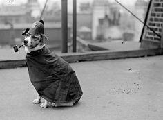 27 Outrageous Vintage Photographs of Dogs Smoking Pipes ~ vintage everyday – Photo Funny Funny Vintage Photos, Vintage Photographs, Vintage Dog, Vintage Humor, Nanny Dog, Poor Dog, Dog Wear, Dog Photos, Animal Photography