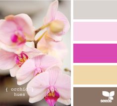 Orchid Hues - http://design-seeds.com/index.php/home/entry/orchid-hues