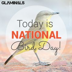 National Bird Day. Check out Glaminals.com today