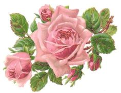 BiG OLd FasHioNeD PinK RoSeS ShAbBy WaTerSLiDe DeCaLs