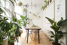 The Sill: How we created a hidden oasis in NYC🌿 | Milled