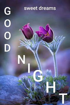 Top 10 Good night images Images, Greetings, Pictures for Whatsapp - bestwishespics. Happy Good Night, Good Night Msg, Good Night I Love You, Good Night Messages, Good Night Wishes, Good Night Sweet Dreams, Good Morning Good Night, Morning Msg, Sweet Night