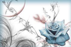 blue rose wallpaper - Pesquisa Google