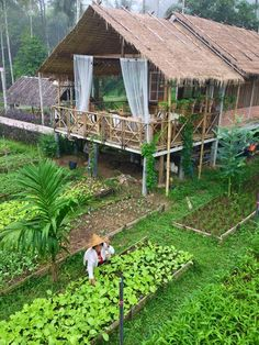 Simple self-sustaining life in Thailand