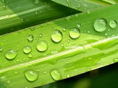 Water, Drops, Leaf, Grass, Green