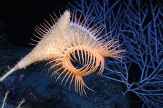 NPO Wetenschap - Diepzee vol geheimen