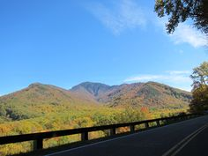 Fall foliage along Newfound Gap Rd in Great Smoky Mountains National Park