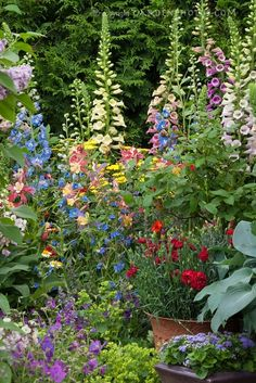 lovely cottage garden -Beautiful Foxgloves!