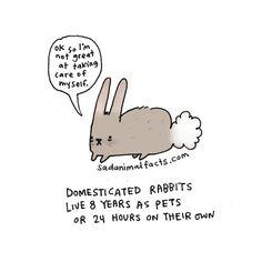 I've got some bad news about pet rabbits.