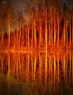 Reflections by Jussi Hietaniemi Beautiful World, Beautiful Images, Cool Pictures, Cool Photos, Orange Braun, Mirror Image, Photos Du, Nature Photos, Wonders Of The World