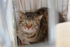 里親さんブログ横浜からやって来た猫達 ハヤト君 猫 里親募集中 - http://iyaiya.jp/cat/archives/73437